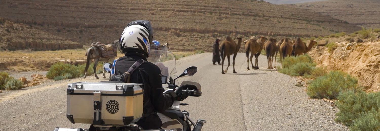 Punta a Punta Marruecos 2019 camellos